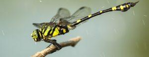 Familias de insectos y arácnidos