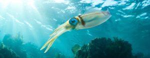 Fauna del Mar Caribe